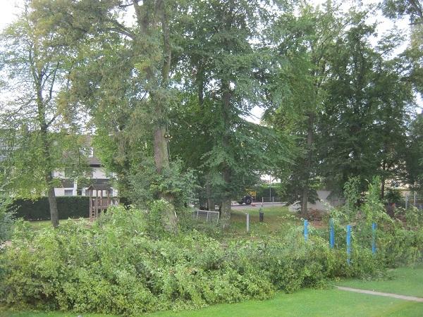 September 2011: Im Garten müssen Bäume gefällt werden